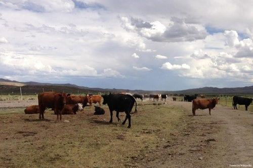 Sudán dispone de 160 millones de cabeza de ganado