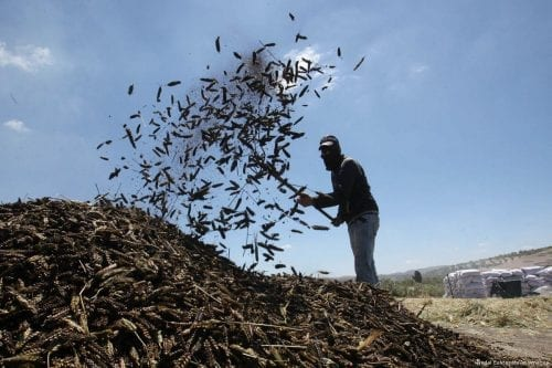 Colonos judíos atacan a agricultores palestinos al norte de Ramallah