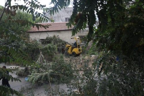 Hebrón: Colonos israelíes arrancan más de 100 árboles propiedad de…