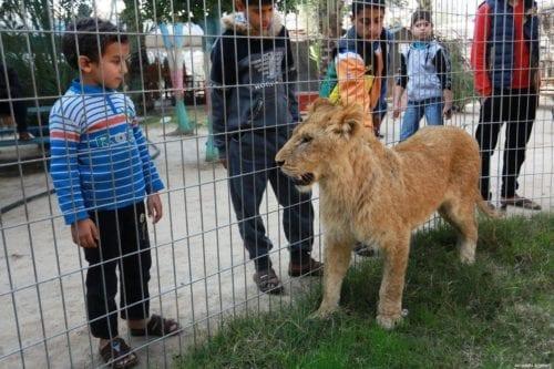 Los animales de Gaza encuentran un nuevo hogar tras las…